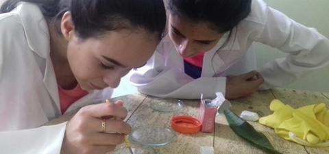 Produção de Repelente Para o Combate à Dengue